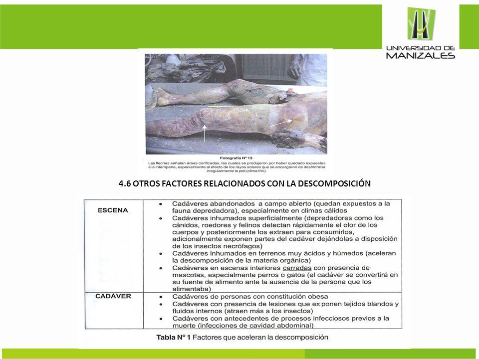 4.6 OTROS FACTORES RELACIONADOS CON LA DESCOMPOSICIÓN