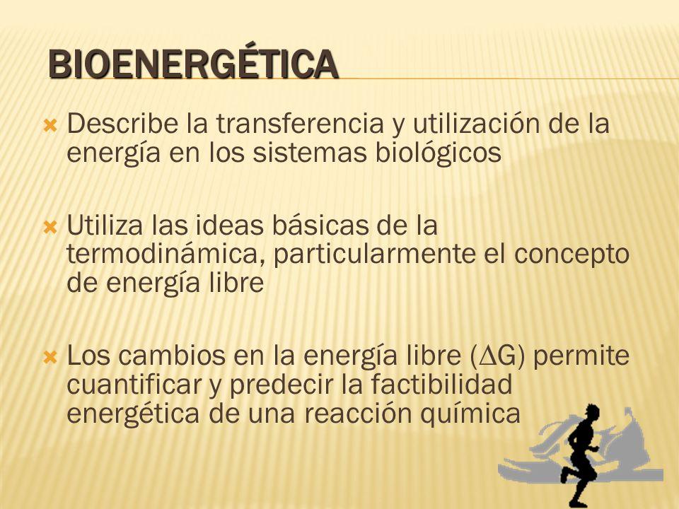 BIOENERGÉTICA Describe la transferencia y utilización de la energía en los sistemas biológicos.
