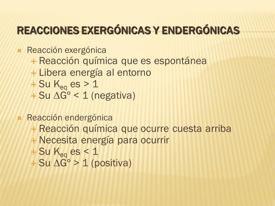 Reacciones exergónicas y endergónicas
