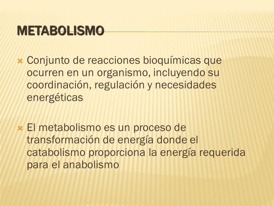 METABOLISMO Conjunto de reacciones bioquímicas que ocurren en un organismo, incluyendo su coordinación, regulación y necesidades energéticas.