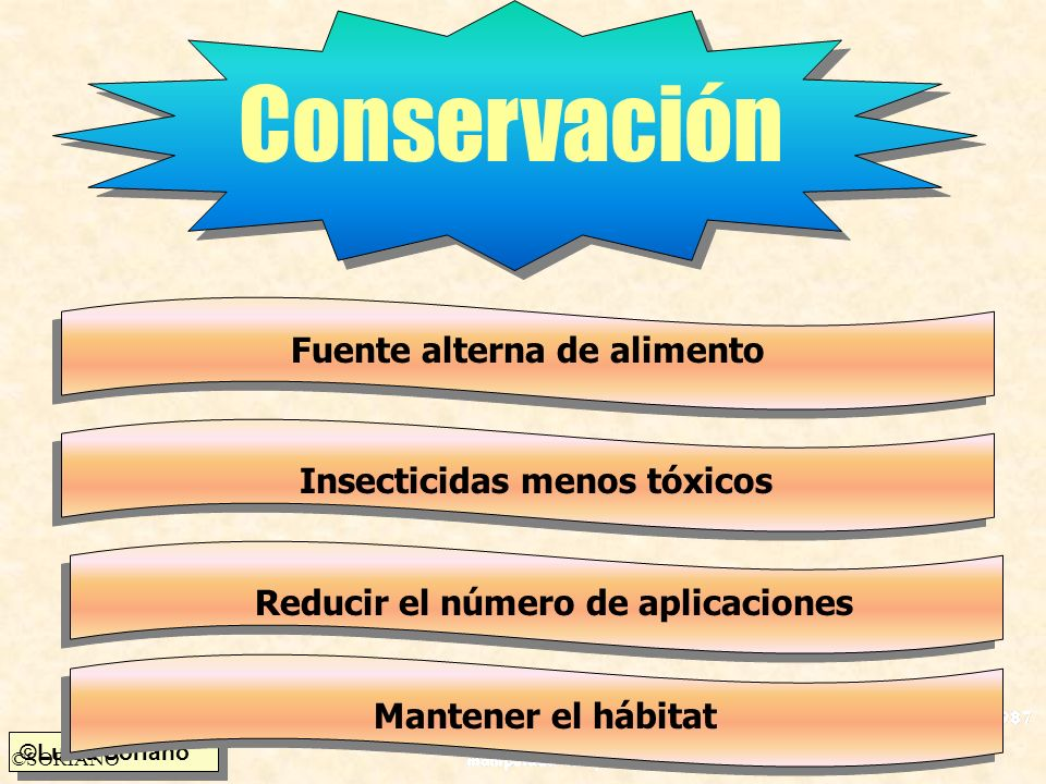 Conservación Fuente alterna de alimento Insecticidas menos tóxicos