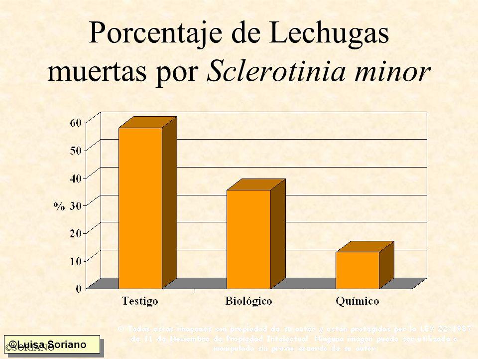 Porcentaje de Lechugas muertas por Sclerotinia minor