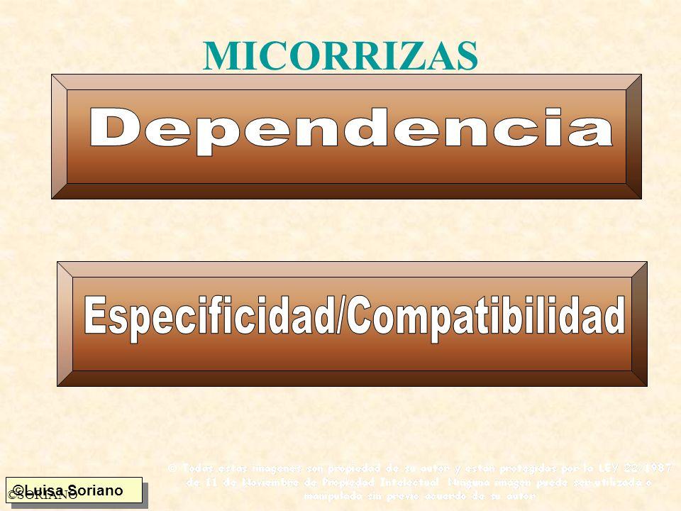 Especificidad/Compatibilidad