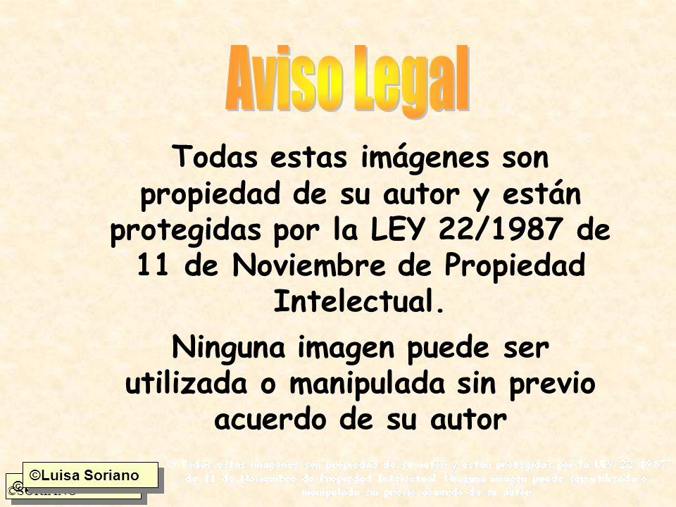 Todas estas imágenes son propiedad de su autor y están protegidas por la LEY 22/1987 de 11 de Noviembre de Propiedad Intelectual.