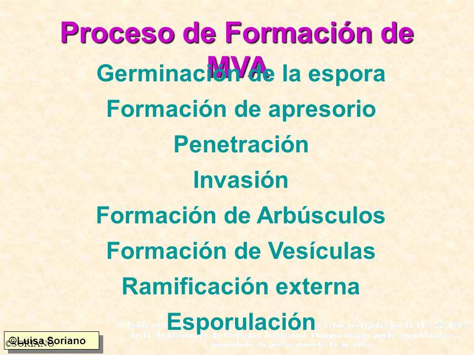 Proceso de Formación de MVA