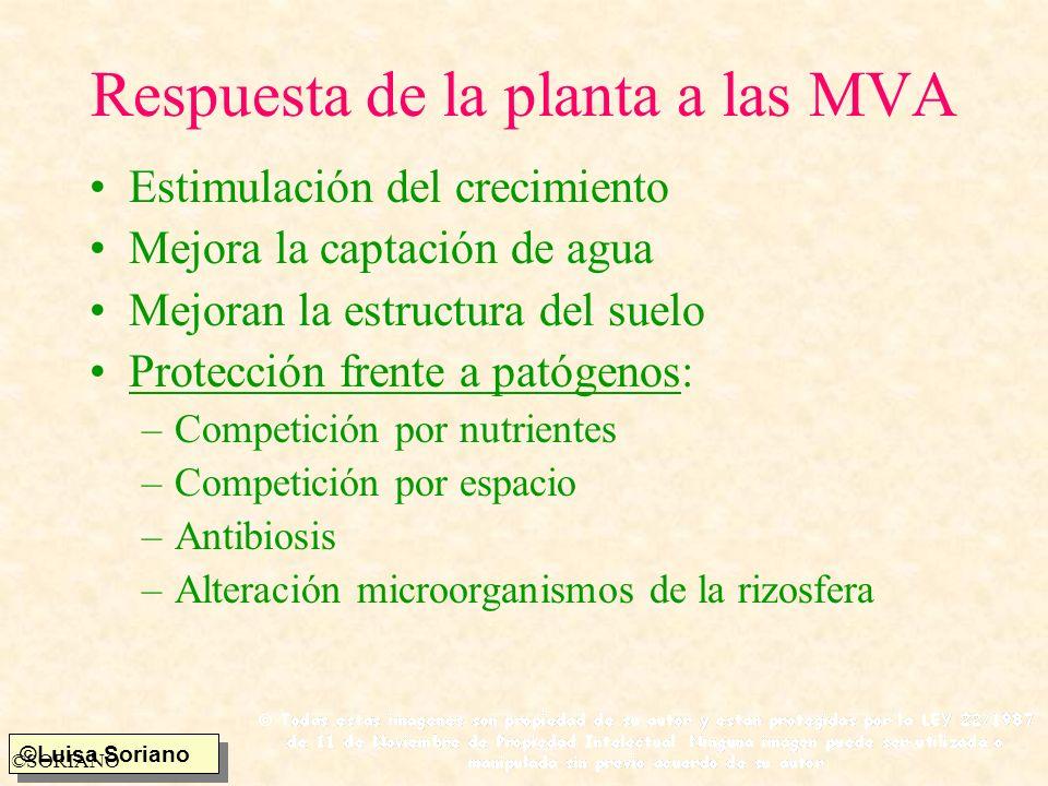 Respuesta de la planta a las MVA