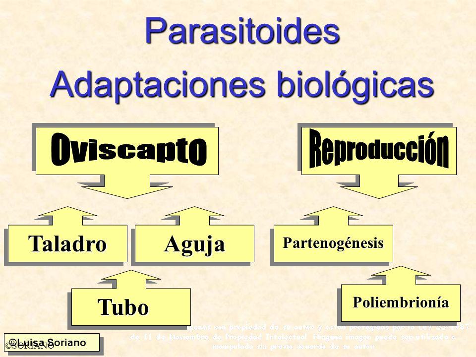 Adaptaciones biológicas