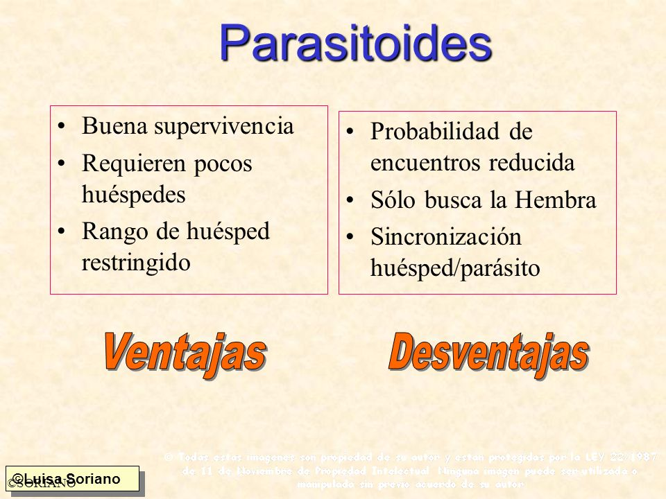 Parasitoides Ventajas Desventajas Buena supervivencia