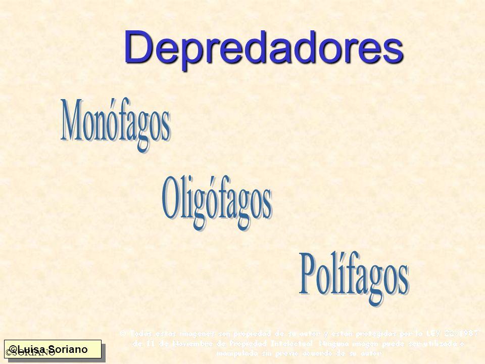 Depredadores Monófagos Oligófagos Polífagos ©SORIANO