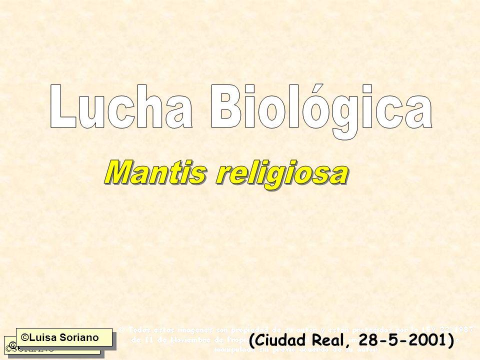 Lucha Biológica Mantis religiosa (Ciudad Real, 28-5-2001)