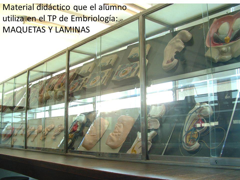 Material didáctico que el alumno utiliza en el TP de Embriología: