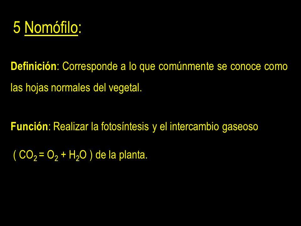 5 Nomófilo: Definición: Corresponde a lo que comúnmente se conoce como las hojas normales del vegetal.
