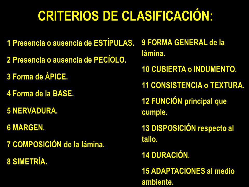 CRITERIOS DE CLASIFICACIÓN: