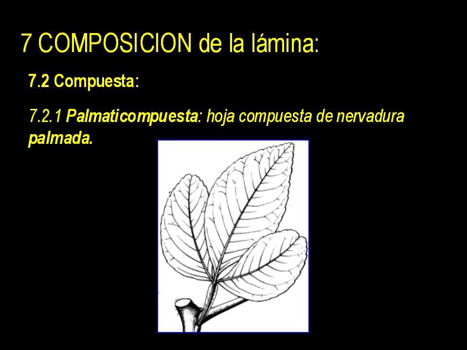 7 COMPOSICION de la lámina: