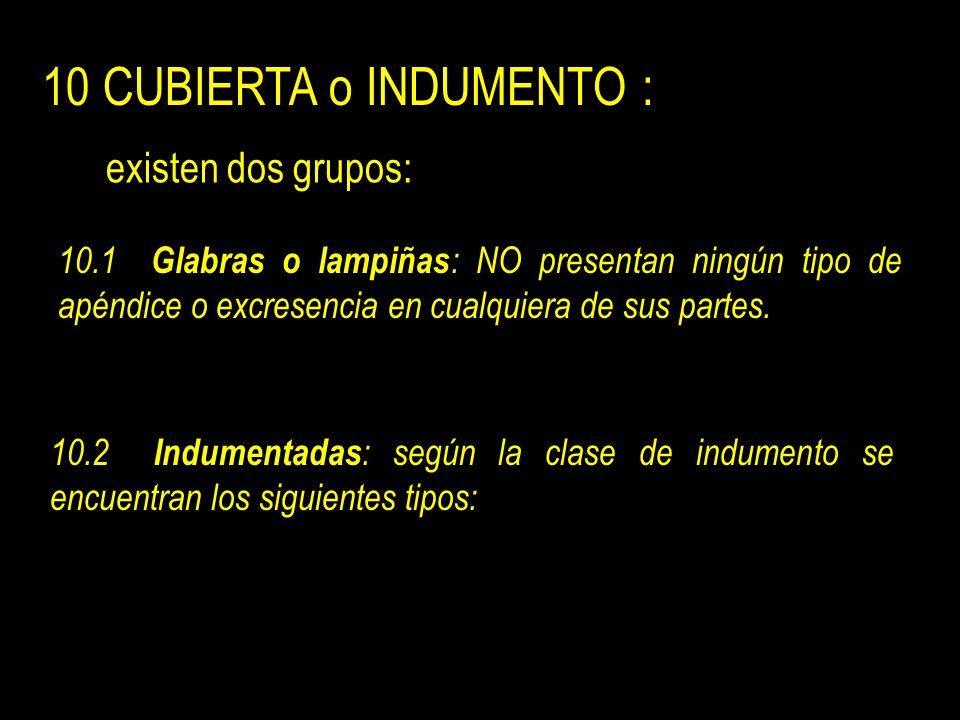 10 CUBIERTA o INDUMENTO : existen dos grupos: