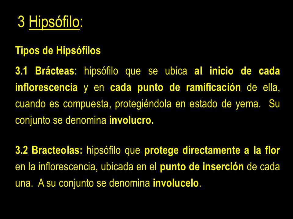 3 Hipsófilo: Tipos de Hipsófilos