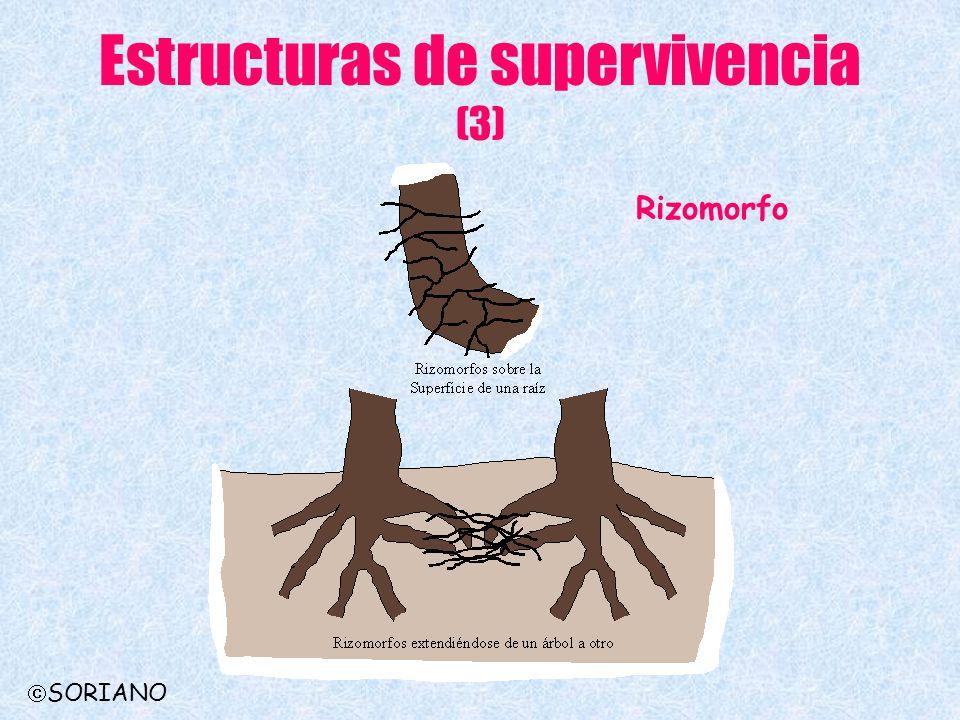 Estructuras de supervivencia (3)