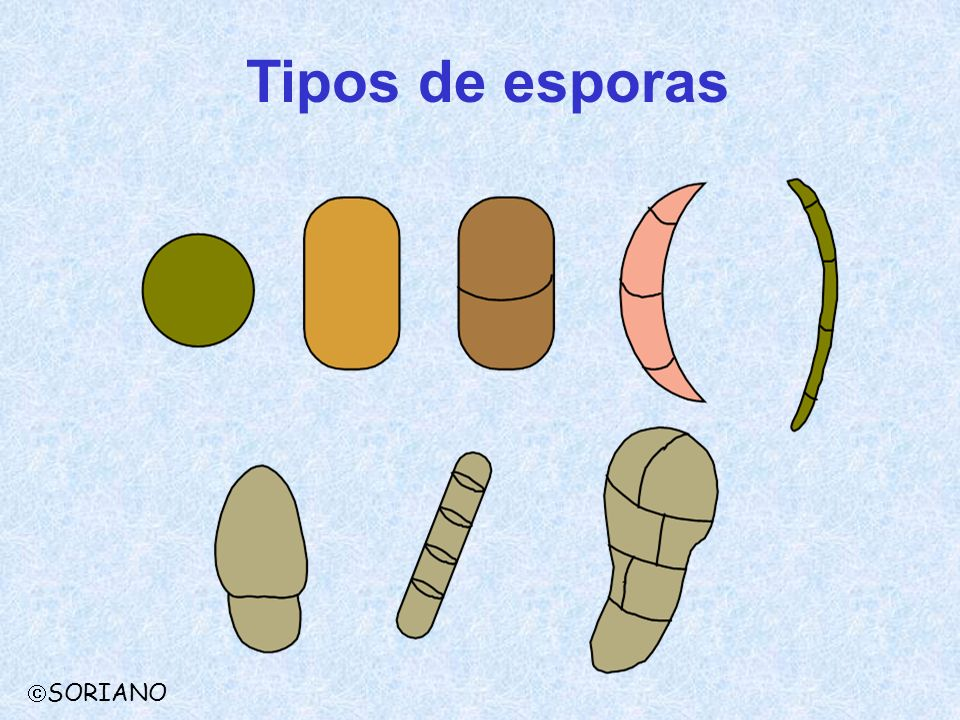 Tipos de esporas SORIANO
