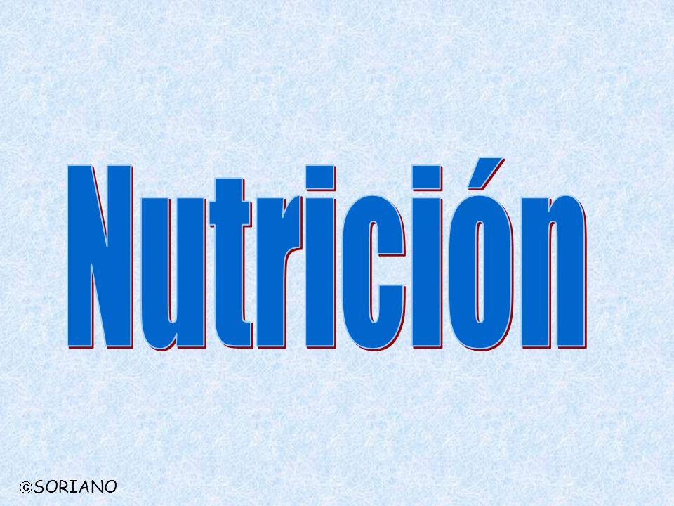 Nutrición SORIANO