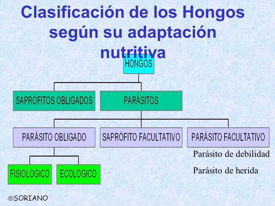 Clasificación de los Hongos según su adaptación nutritiva