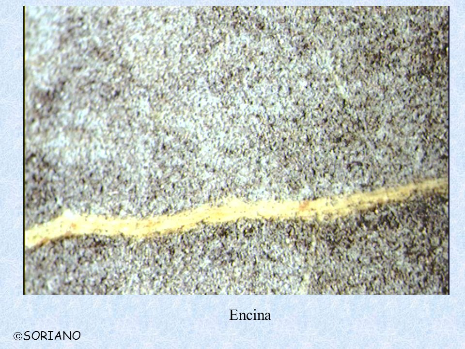 Encina SORIANO