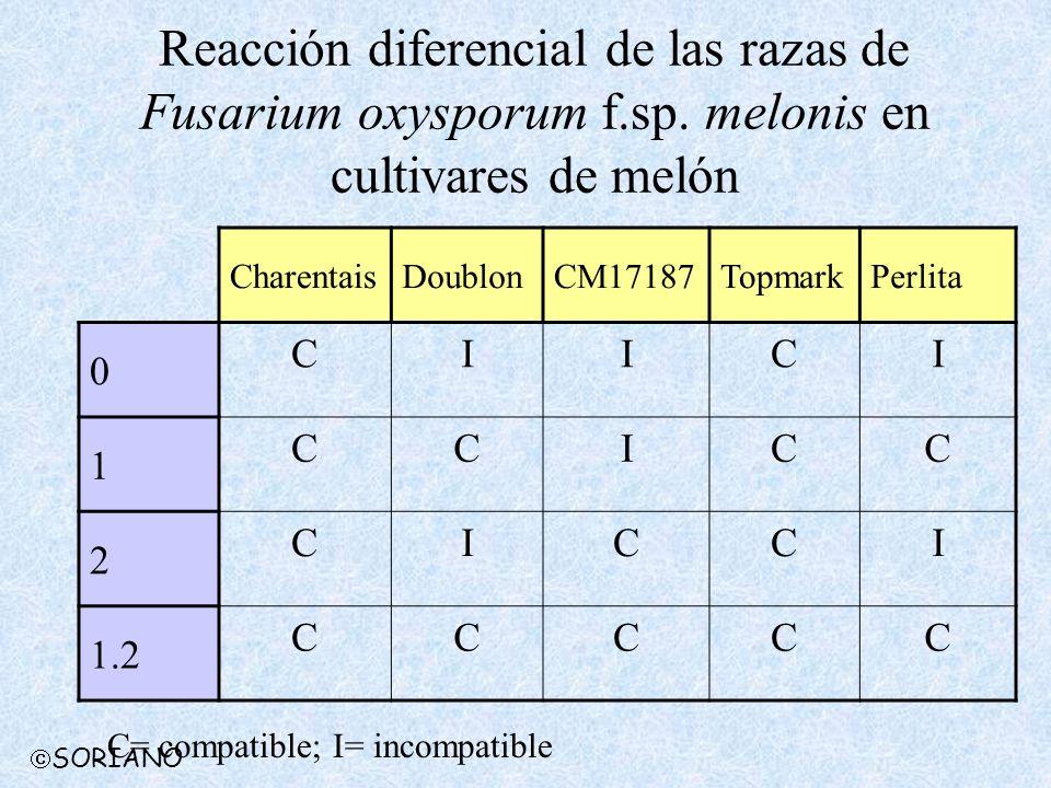 Reacción diferencial de las razas de Fusarium oxysporum f. sp