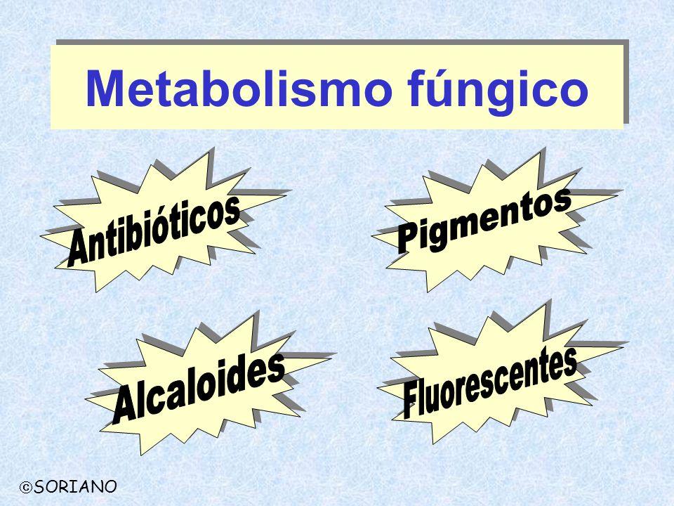 Metabolismo fúngico Pigmentos Antibióticos Fluorescentes Alcaloides