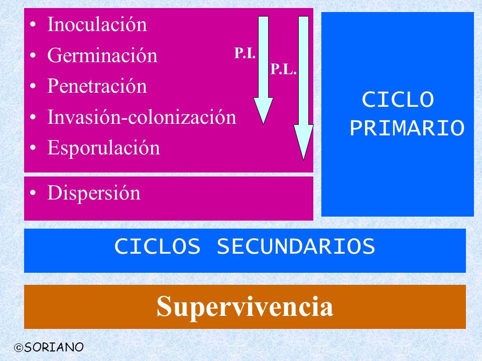 Supervivencia CICLO PRIMARIO CICLOS SECUNDARIOS Inoculación