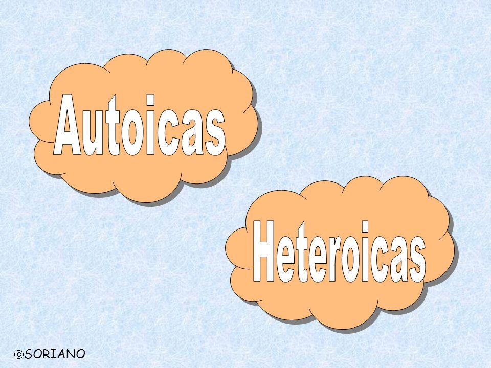 Autoicas Heteroicas SORIANO