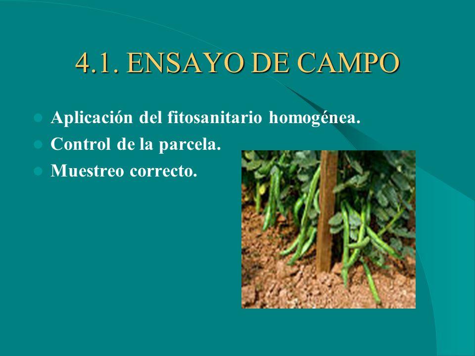 4.1. ENSAYO DE CAMPO Aplicación del fitosanitario homogénea.