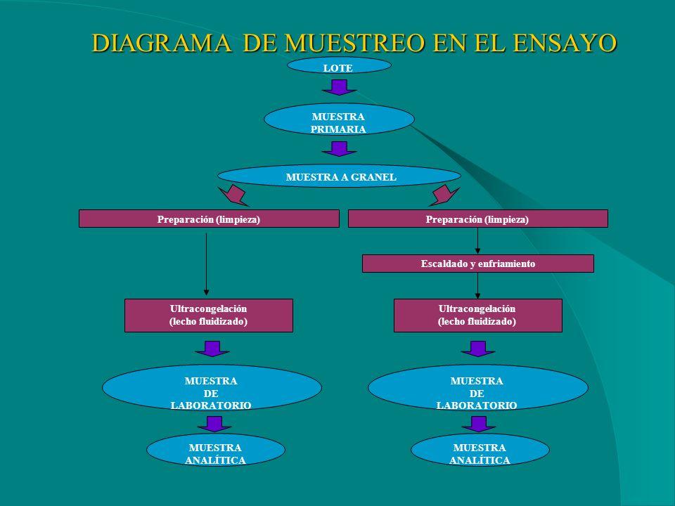 DIAGRAMA DE MUESTREO EN EL ENSAYO