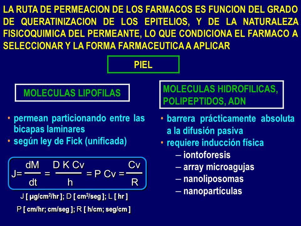 PIEL MOLECULAS LIPOFILAS