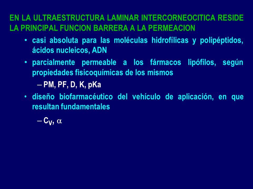 EN LA ULTRAESTRUCTURA LAMINAR INTERCORNEOCITICA RESIDE LA PRINCIPAL FUNCION BARRERA A LA PERMEACION