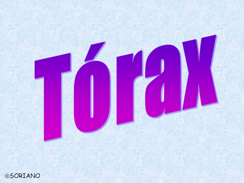 Tórax SORIANO
