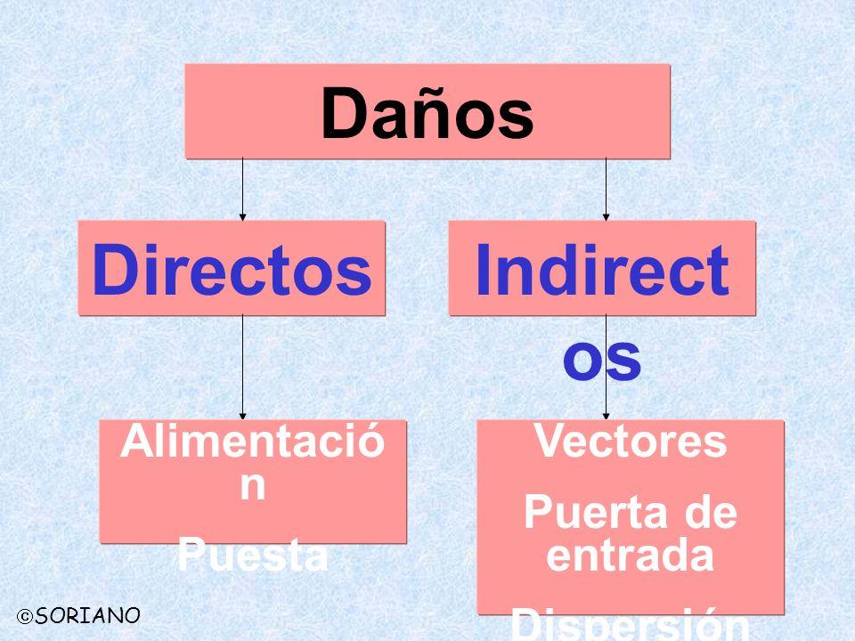 Daños Directos Indirectos