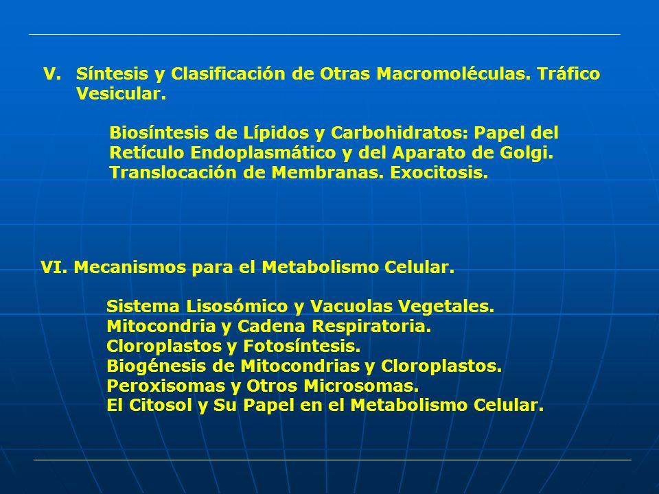 Síntesis y Clasificación de Otras Macromoléculas. Tráfico Vesicular.