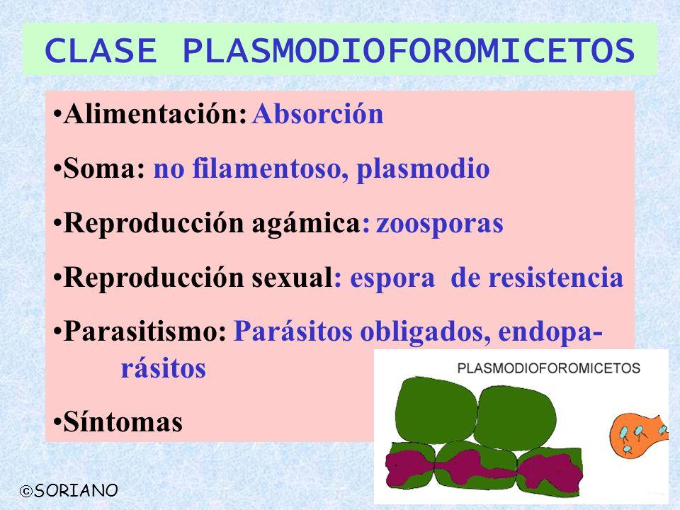 CLASE PLASMODIOFOROMICETOS