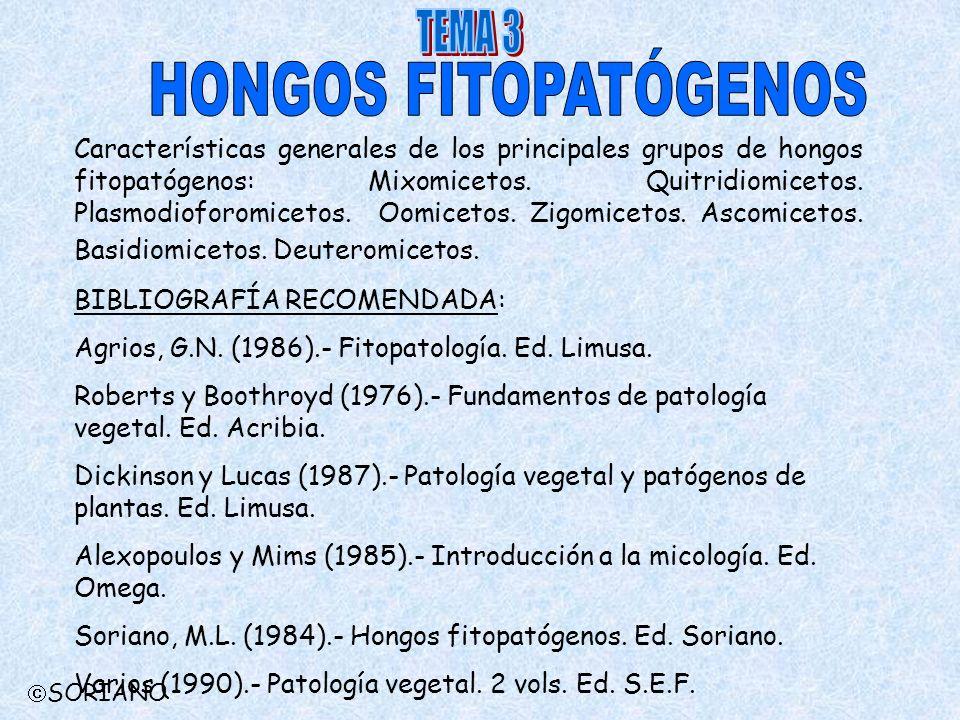 HONGOS FITOPATÓGENOS TEMA 3