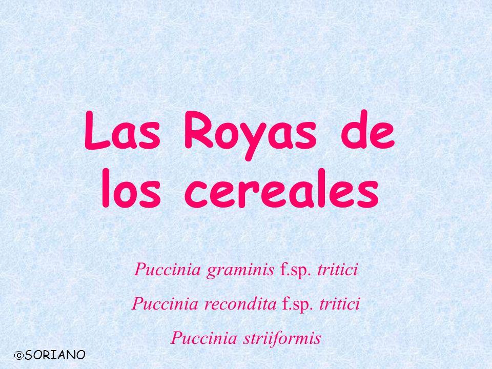 Las Royas de los cereales