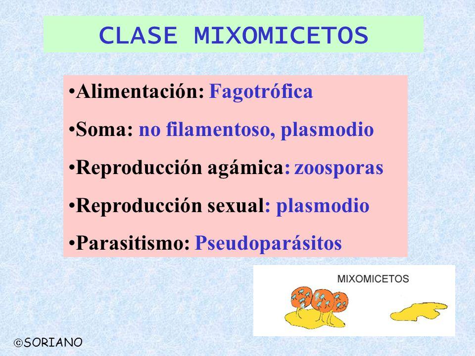 CLASE MIXOMICETOS Alimentación: Fagotrófica