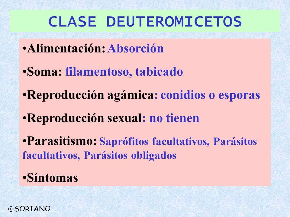 CLASE DEUTEROMICETOS Alimentación: Absorción