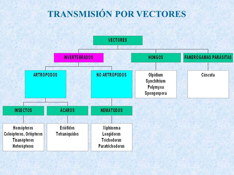 TRANSMISIÓN POR VECTORES