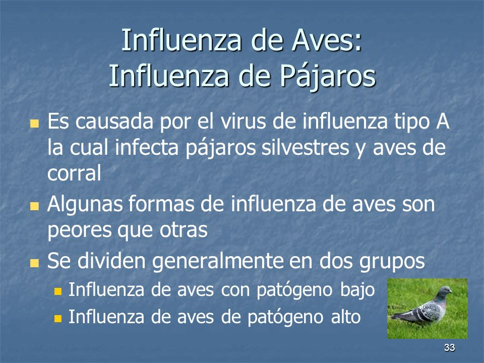 Influenza de Aves: Influenza de Pájaros