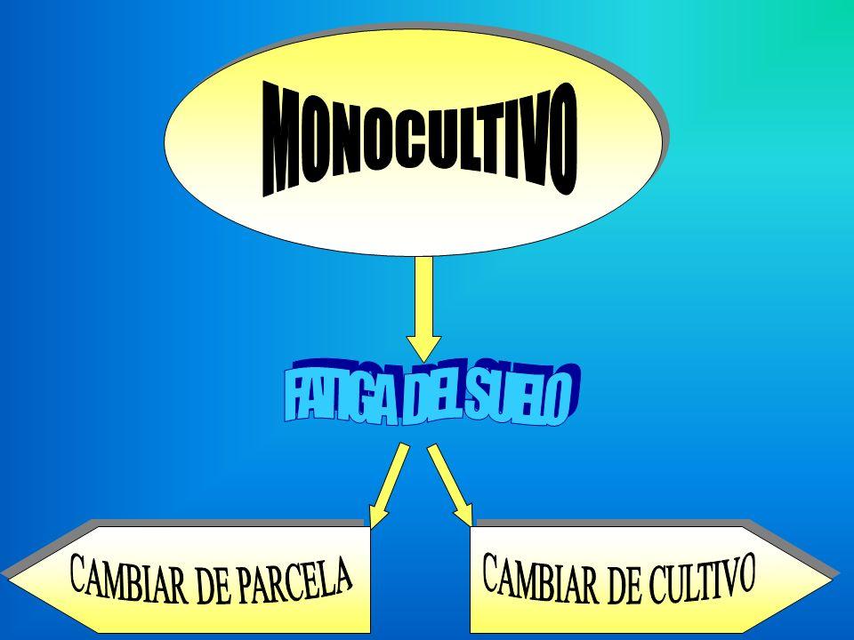 MONOCULTIVO FATIGA DEL SUELO CAMBIAR DE PARCELA CAMBIAR DE CULTIVO