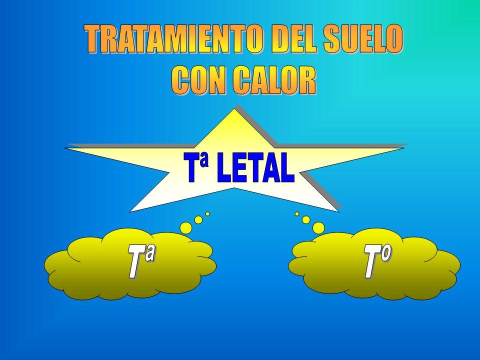 TRATAMIENTO DEL SUELO CON CALOR Tª LETAL Tª Tº