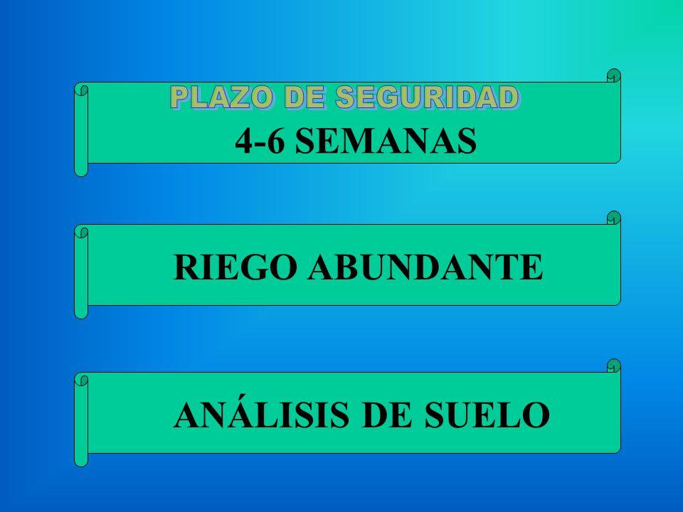 4-6 SEMANAS RIEGO ABUNDANTE ANÁLISIS DE SUELO
