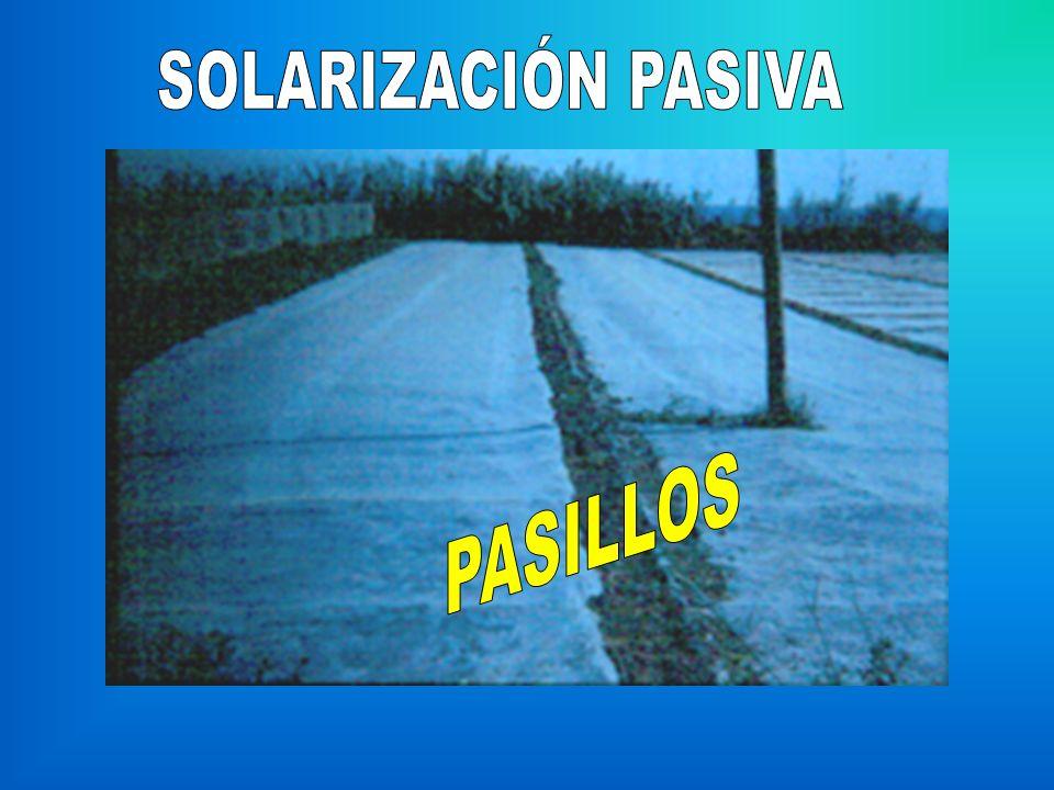 SOLARIZACIÓN PASIVA PASILLOS
