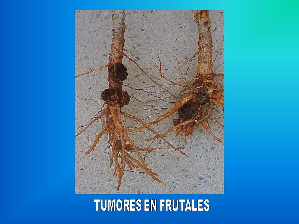 TUMORES EN FRUTALES