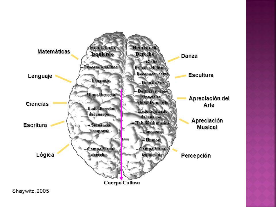 Hemisferio Izquierdo Hemisferio Derecho Cuerpo Calloso Matemáticas