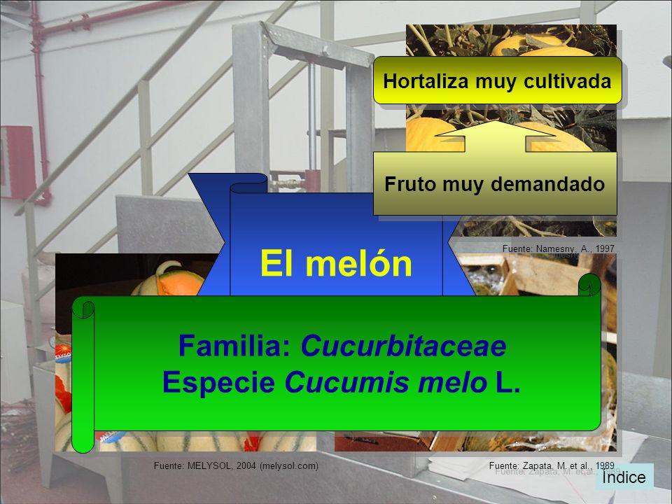 Hortaliza muy cultivada Familia: Cucurbitaceae